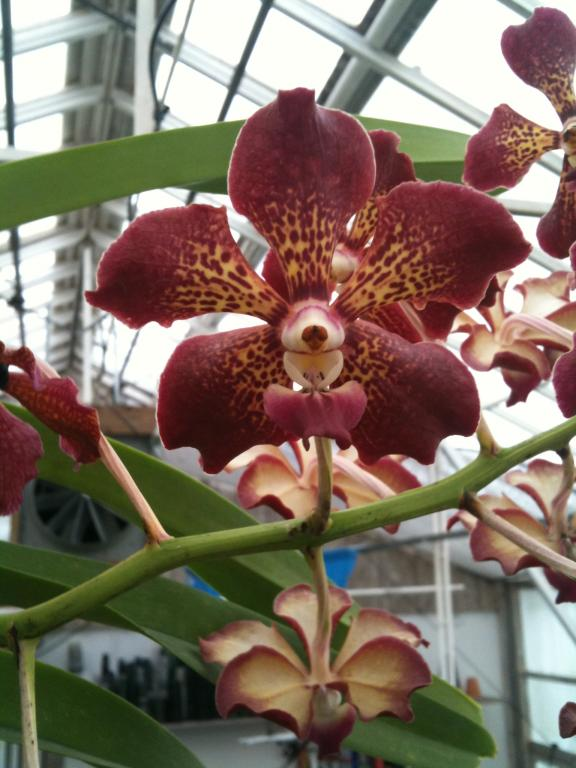 ORCHIDbabies.com closing :( but selling off their stock :)-img_2652-jpg
