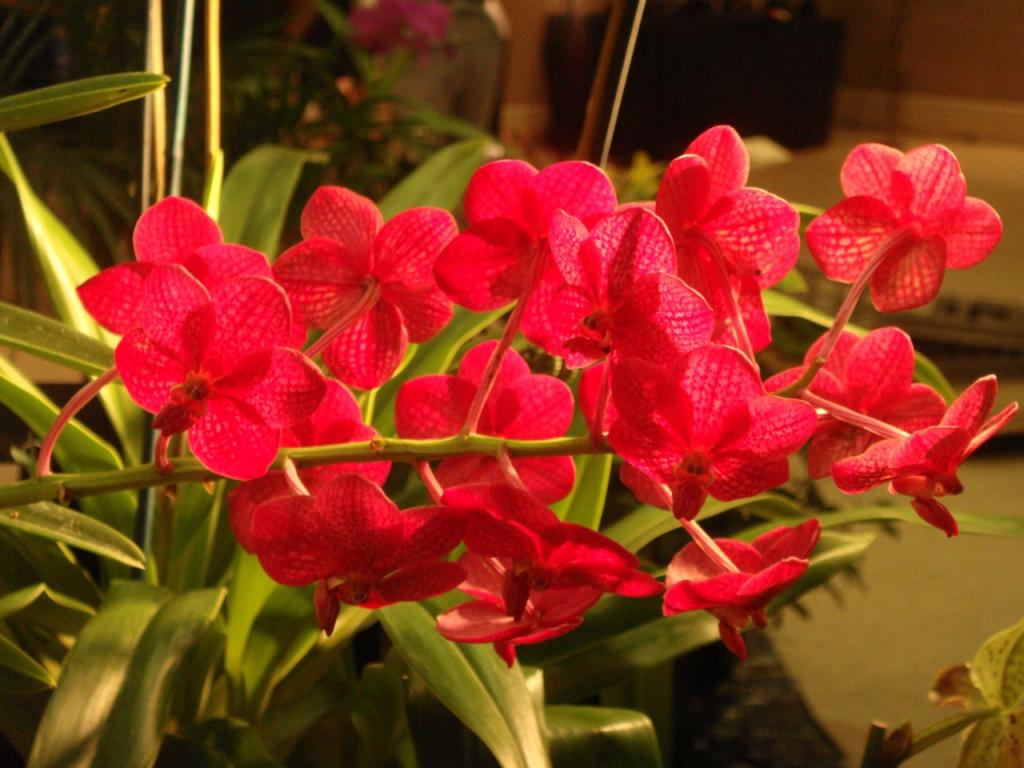ORCHIDbabies.com closing :( but selling off their stock :)-dsc01109-jpg