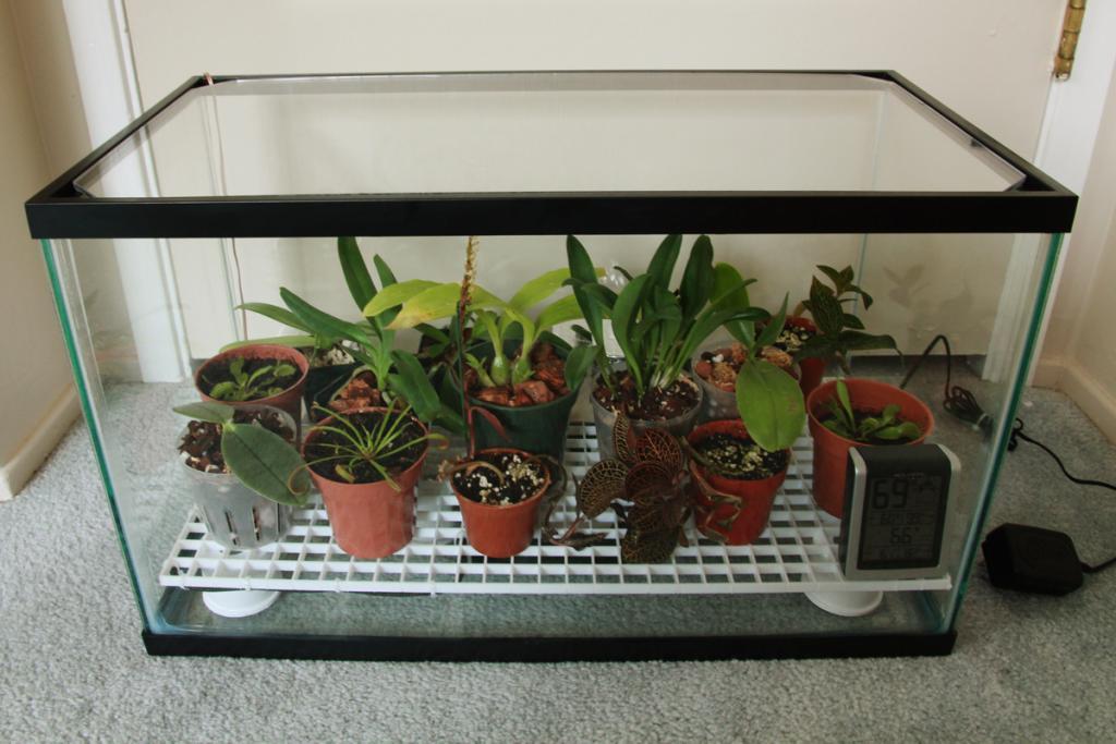 My First Orchidarium-img_8560-jpg
