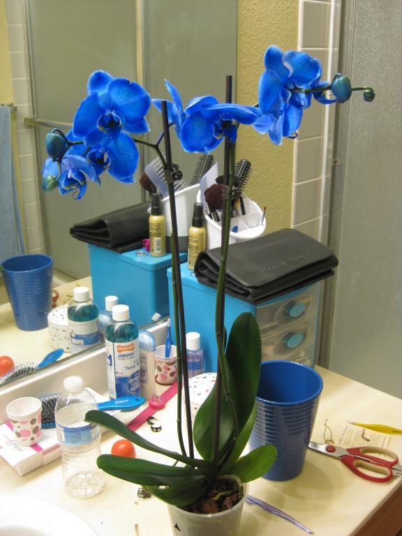 Gemstone Orchids?-img_2703-jpg