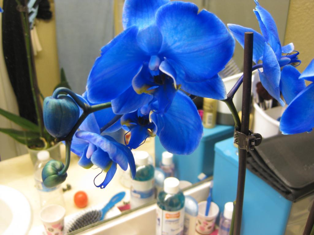 Gemstone Orchids?-img_2707-jpg
