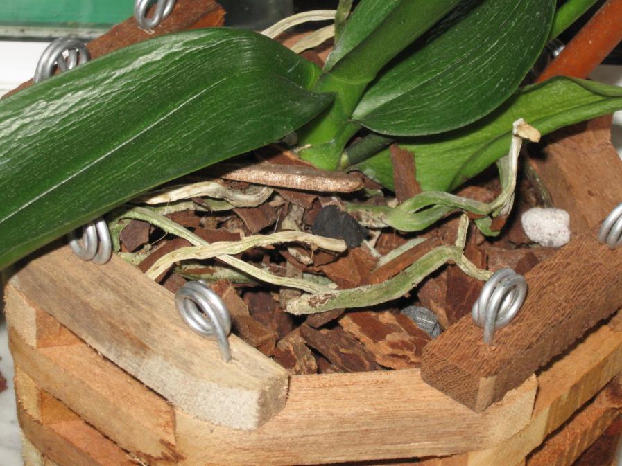 Wrinkled Leaves?-new1-085-jpg