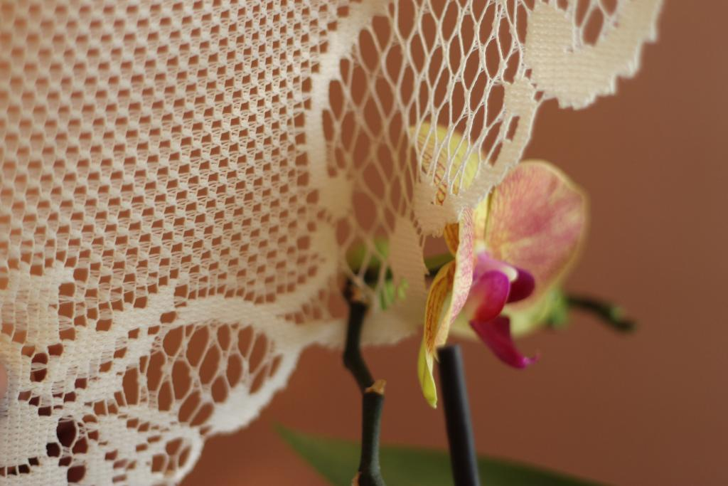 Orchid Thru the curtain-img_0904-jpg