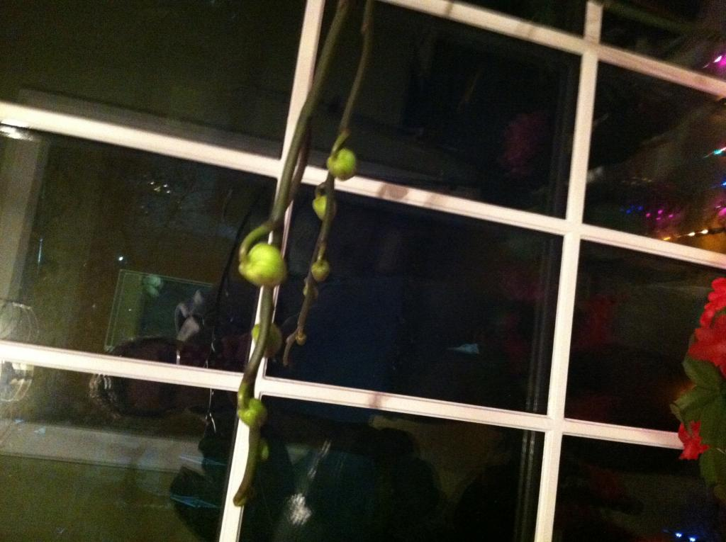 New to site- orchid is growing 2 heavy large stems off maim stems with buds! Help!-image-jpg