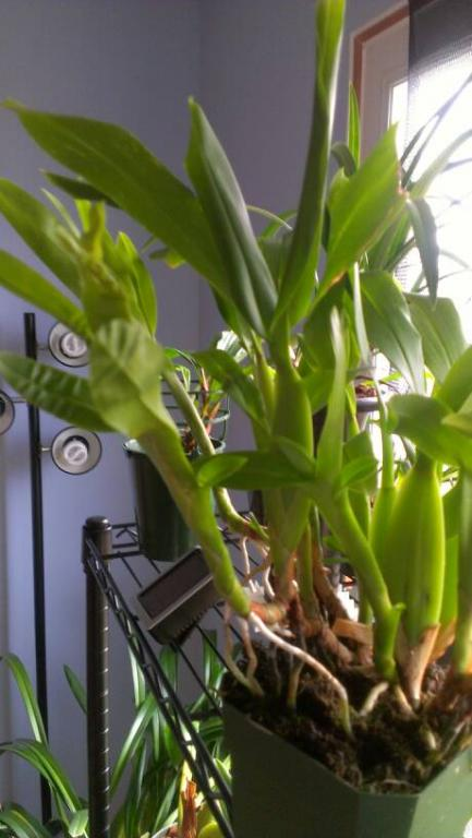 Aspasia lunata-uploadfromtaptalk1354636022405-jpg