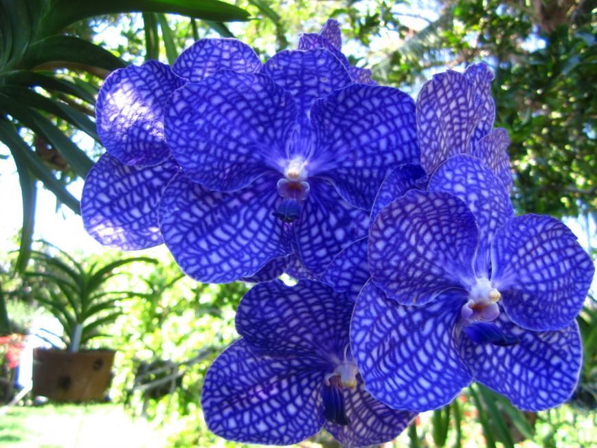 Second Spike on V. Prao Sky Blue-img_2738-jpg