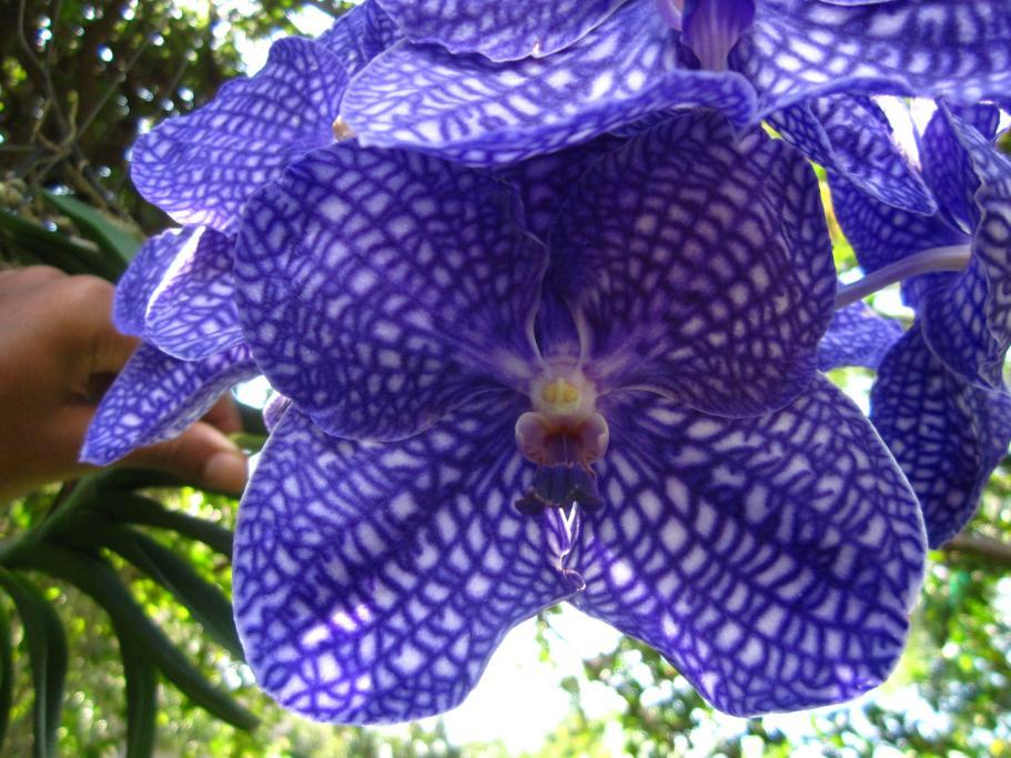 Second Spike on V. Prao Sky Blue-img_2741-jpg