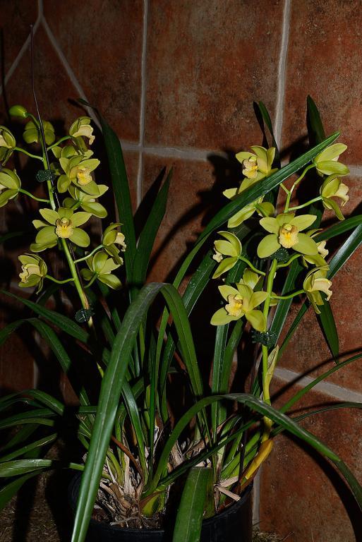 Christmas Blooms-_dsc0625_2012-12-28_424-noid-cym-jpg
