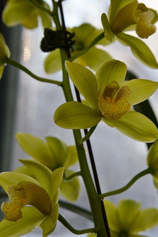 Christmas Blooms-_dsc0633_2012-12-28_432-noid-cym-jpg