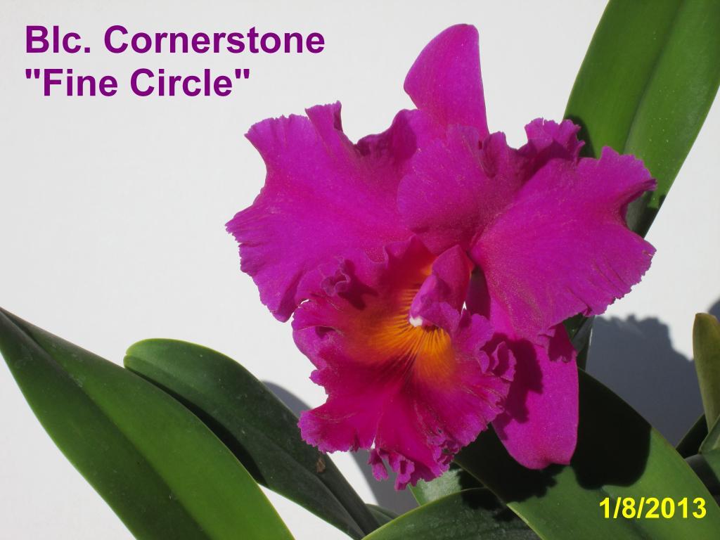 "Blc. Cornerstone ""Fine Circle""-img_0033_1_1-jpg"