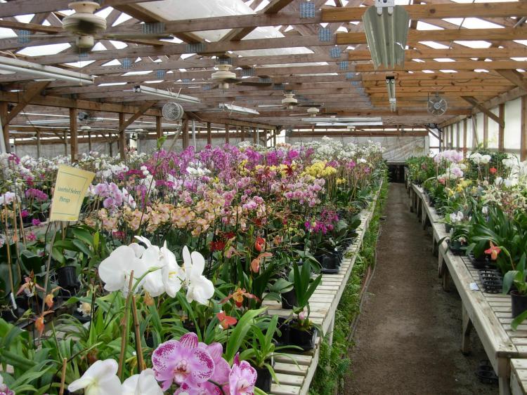 Pics from Hilltop Orchids-hilltop-001-jpg