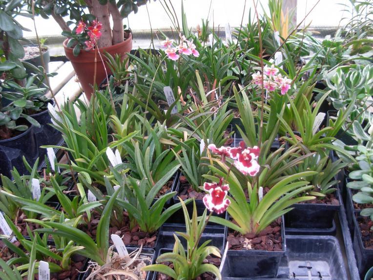 Pics from Hilltop Orchids-hilltop-006-jpg