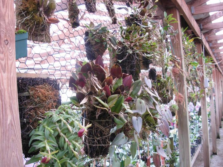 Pics from Hilltop Orchids-hilltop-010-jpg