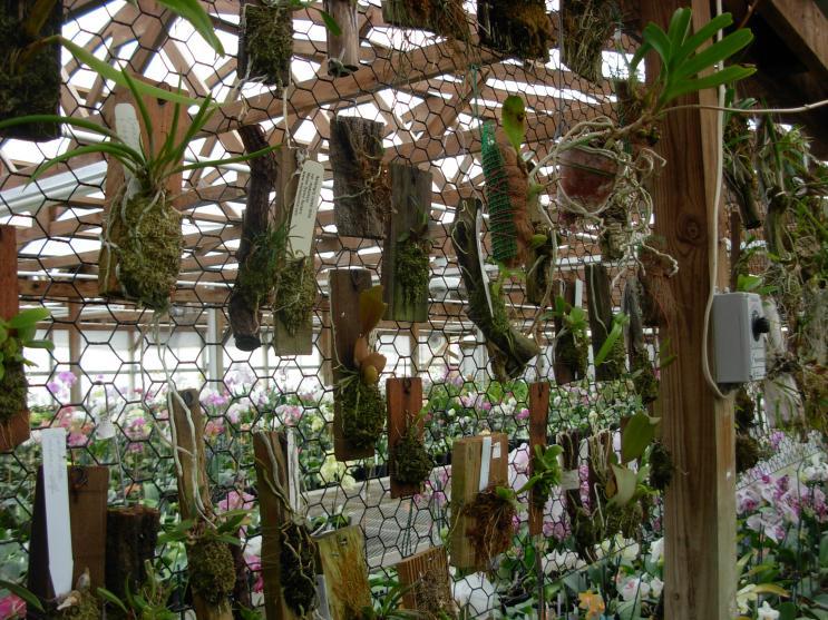 Pics from Hilltop Orchids-hilltop-011-jpg
