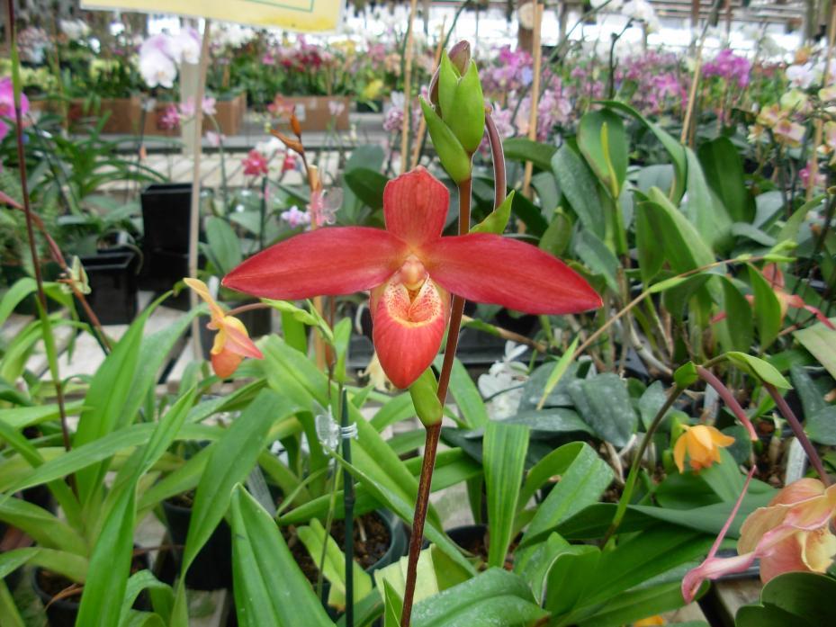 Pics from Hilltop Orchids-hilltop-002-jpg