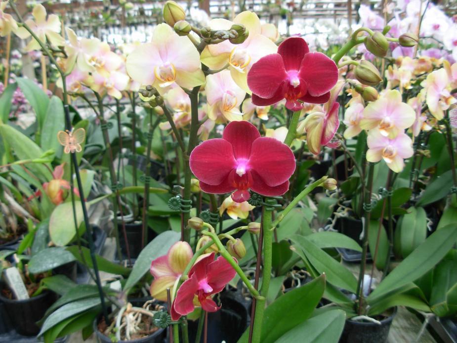 Pics from Hilltop Orchids-hilltop-003-jpg