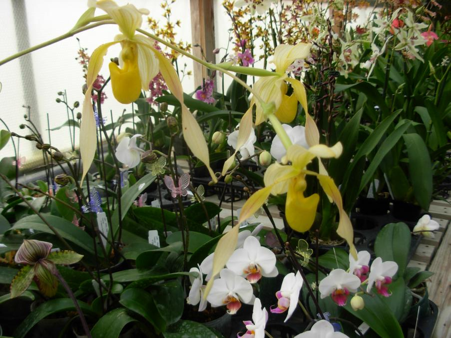 Pics from Hilltop Orchids-hilltop-004-jpg