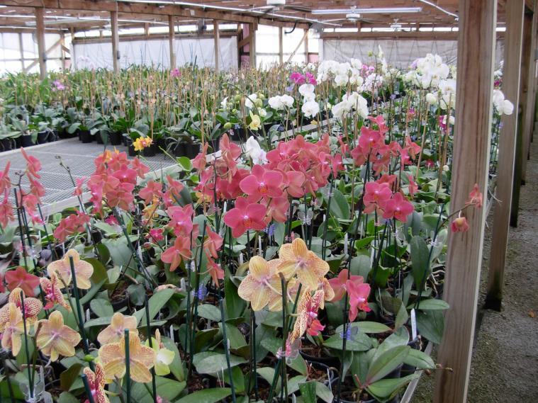 Pics from Hilltop Orchids-hilltop-015-jpg