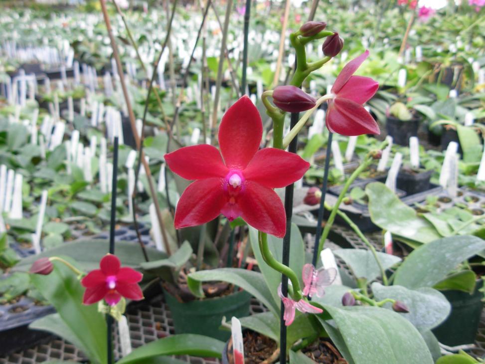 Pics from Hilltop Orchids-hilltop-021-jpg