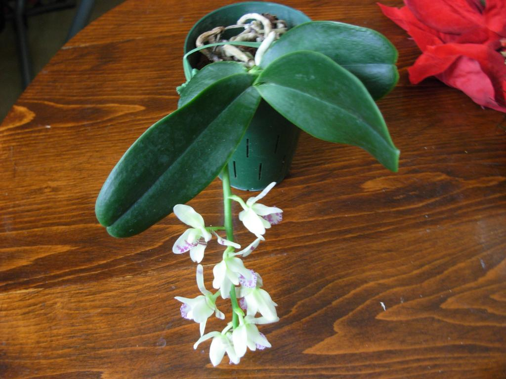 Pics from Hilltop Orchids-hilltop2-001-jpg