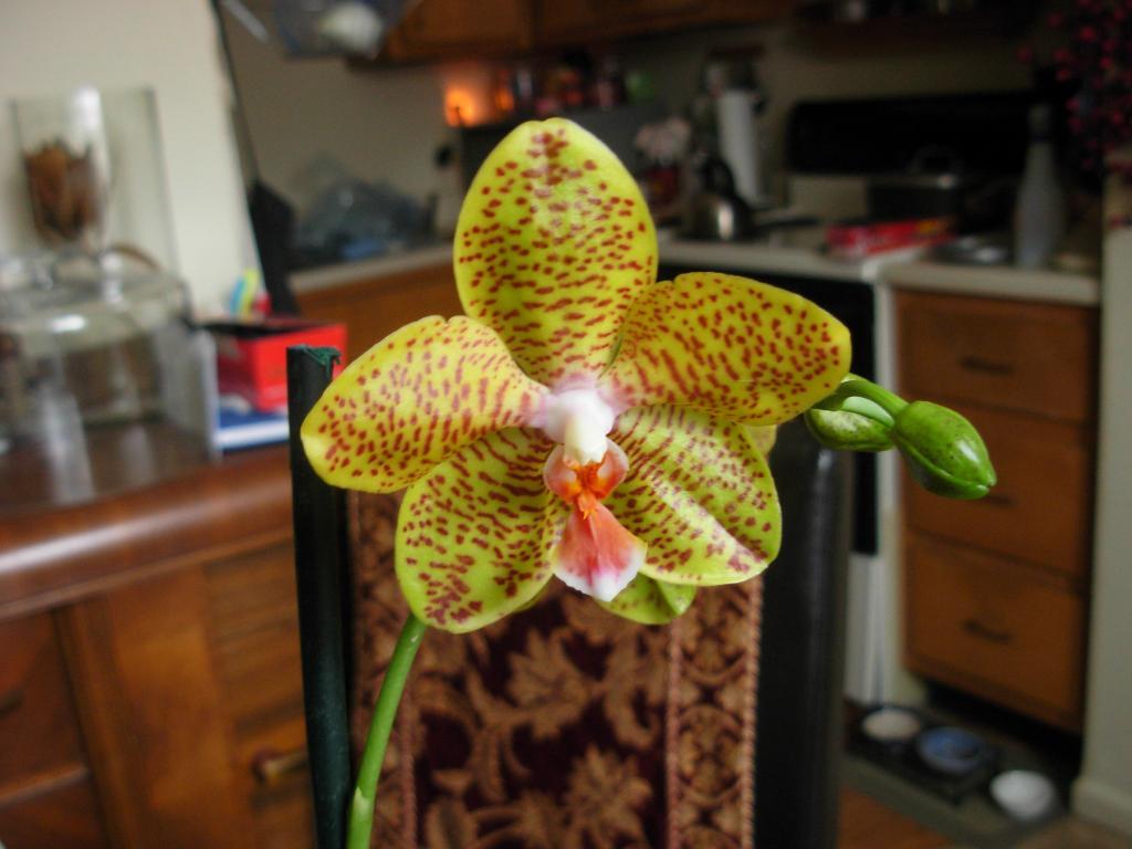 Pics from Hilltop Orchids-hilltop2-002-jpg