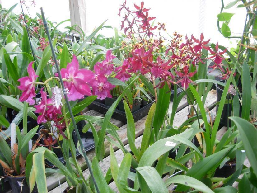 Pics from Hilltop Orchids-hilltop-007-jpg