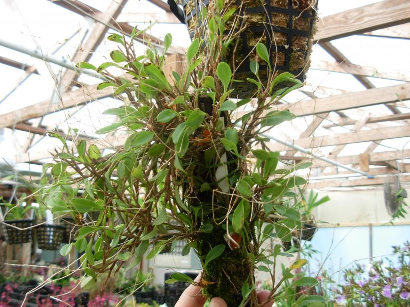 Pics from Hilltop Orchids-hilltop-013-jpg