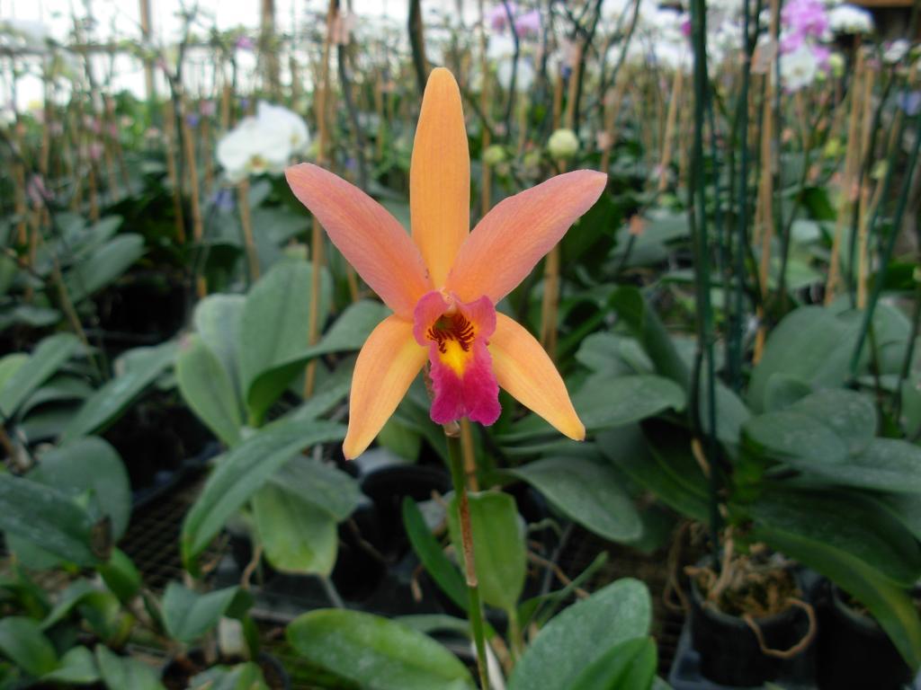 Pics from Hilltop Orchids-hilltop-008-jpg