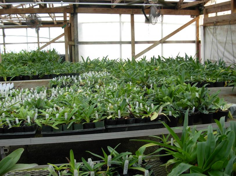 Pics from Hilltop Orchids-hilltop-016-jpg
