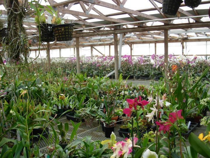 Pics from Hilltop Orchids-hilltop-014-jpg