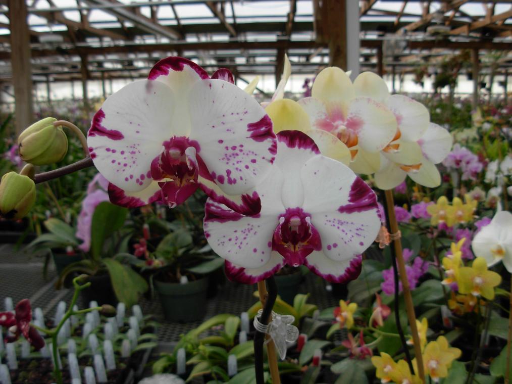 Pics from Hilltop Orchids-hilltop-026-jpg