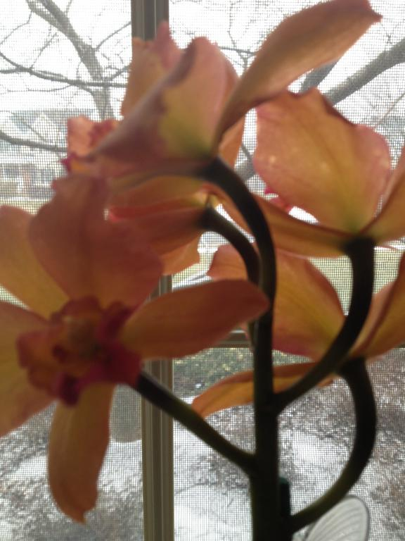 Is this color break?-orchids-001-jpg