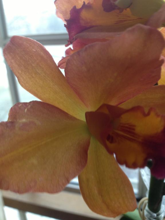 Is this color break?-orchids-010-jpg