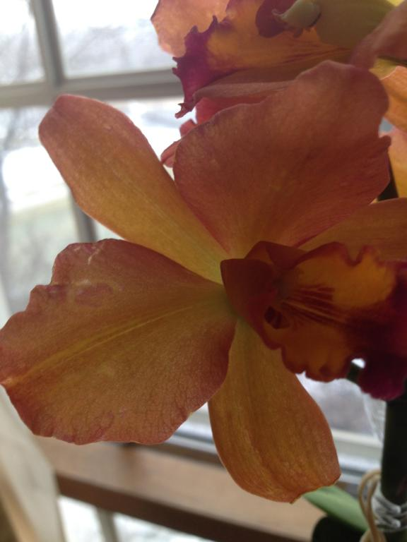 Is this color break?-orchids-011-jpg
