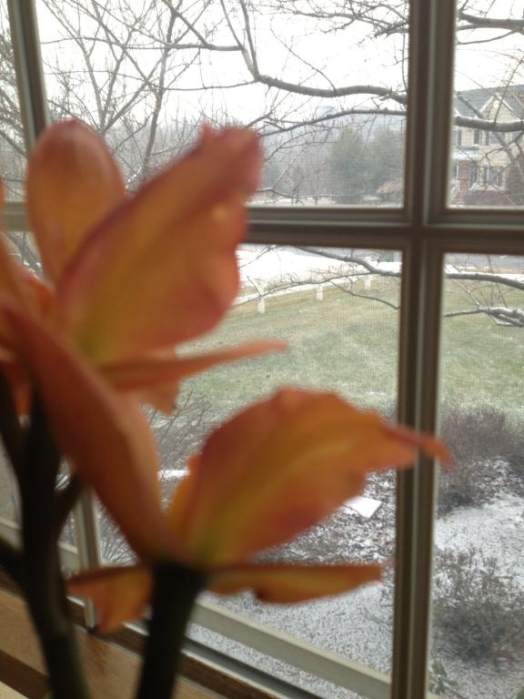 Is this color break?-orchids-012-jpg