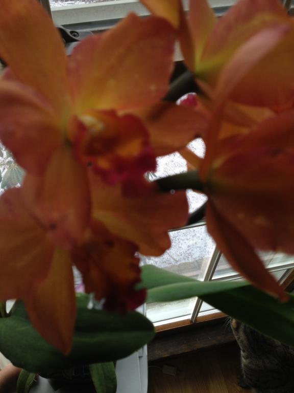 Is this color break?-orchids-018-jpg
