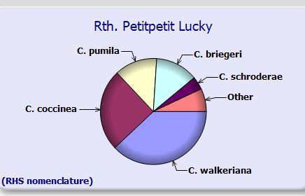 Cattleya doing something strange??-rth-petitpetit-lucky-species-content-jpg