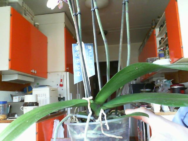 Yu Pin Pearl photos-yu-pin-pearl-leaves-jpg