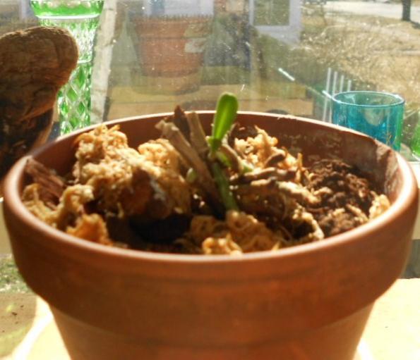 Its growing-little-catt-2-002-jpg