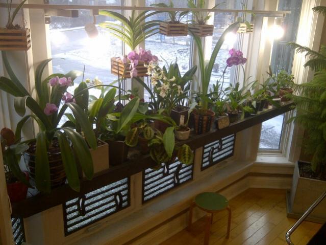 I created a windowsill-plant-shelf-2-jpg