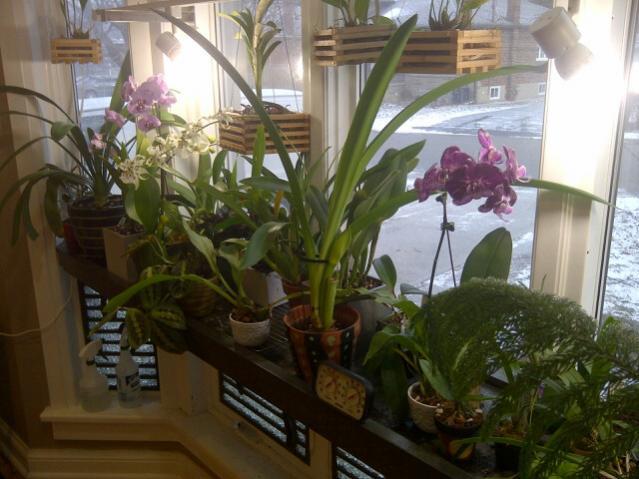 I created a windowsill-plant-shelf-1-jpg