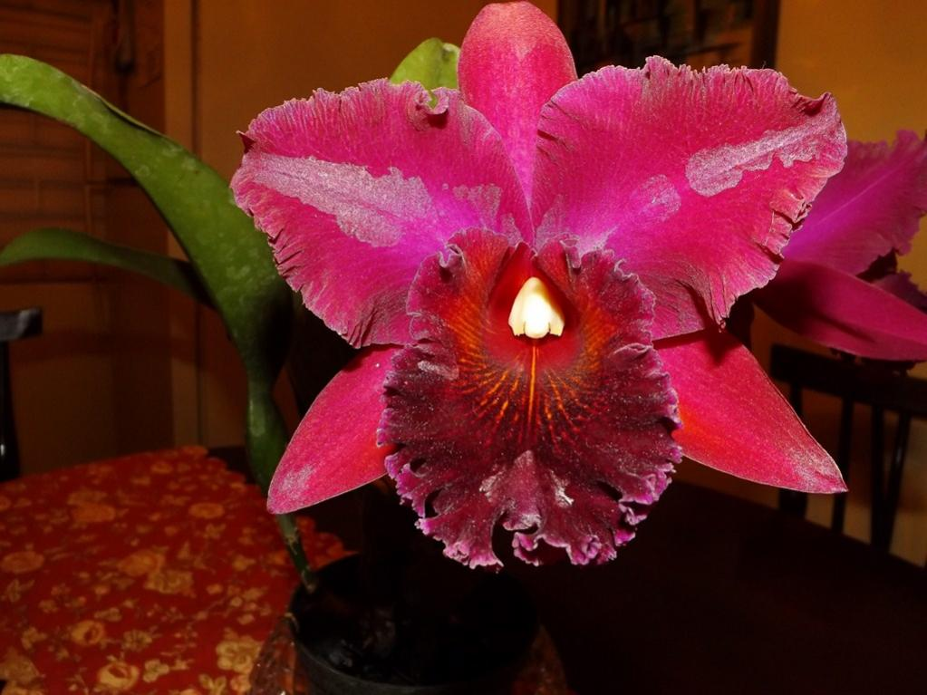 Blc. Chia Lin 'New City' AM/AOS 3rd times a big charm!-dscf2009-copy-jpg