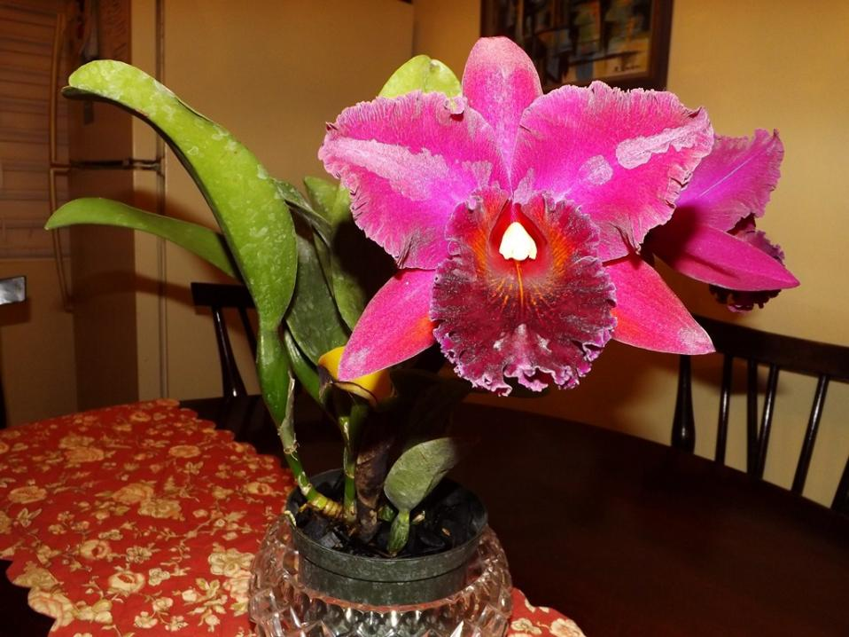 Blc. Chia Lin 'New City' AM/AOS 3rd times a big charm!-dscf2011-copy-jpg