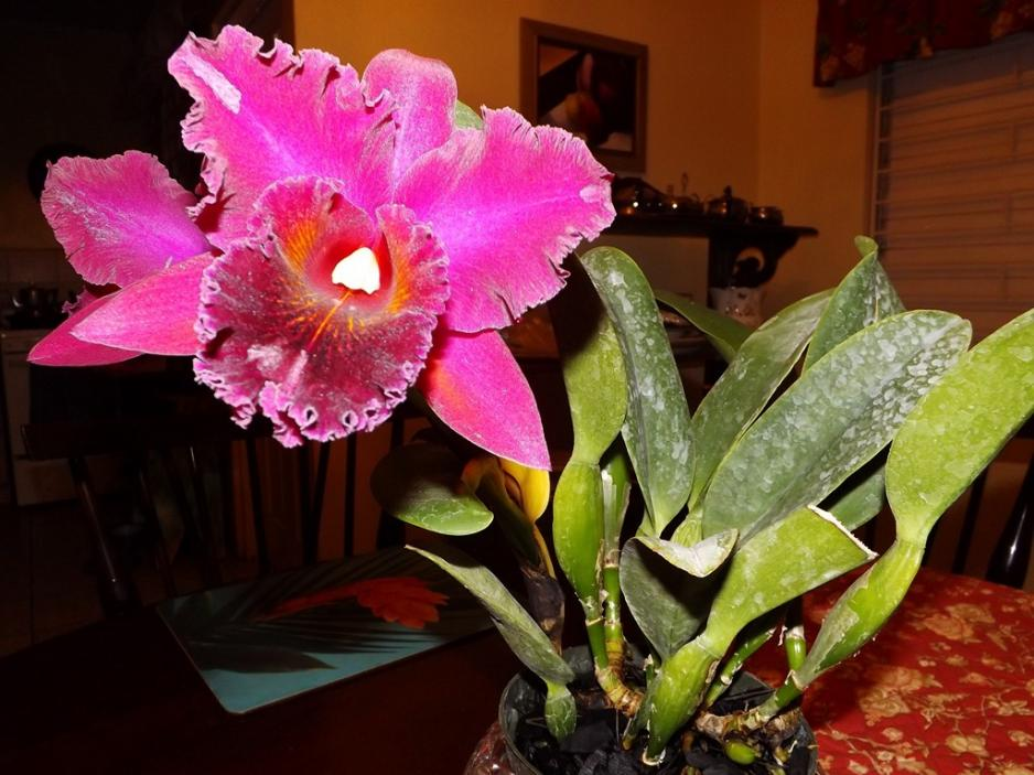 Blc. Chia Lin 'New City' AM/AOS 3rd times a big charm!-dscf2012-copy-jpg