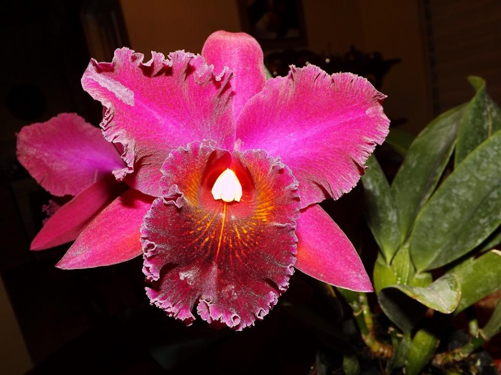 Blc. Chia Lin 'New City' AM/AOS 3rd times a big charm!-dscf2013-copy-jpg
