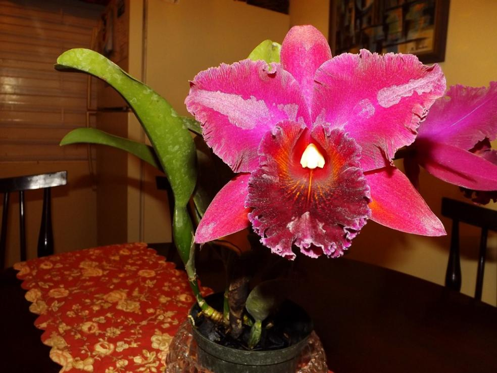 Blc. Chia Lin 'New City' AM/AOS 3rd times a big charm!-dscf2017-copy-jpg