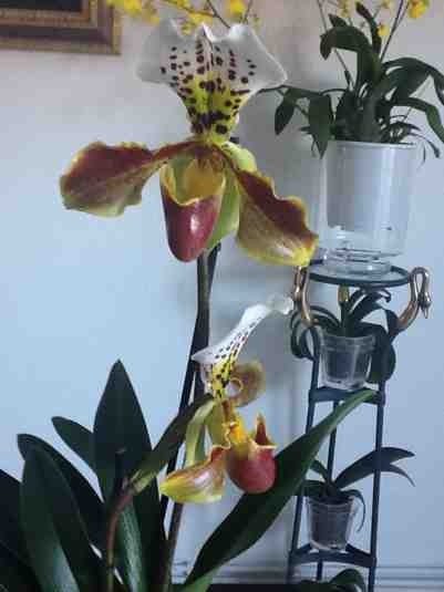 New NoId Paph-imageuploadedbytapatalk1359926989-176338-jpg