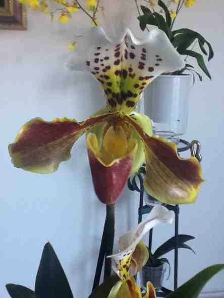 New NoId Paph-imageuploadedbytapatalk1359927001-923802-jpg