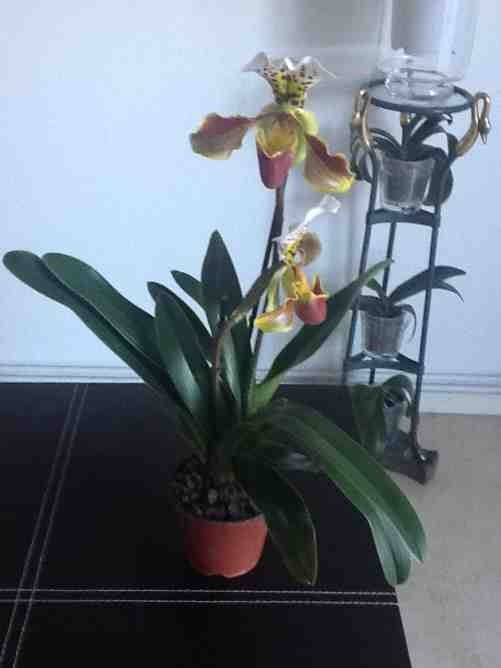New NoId Paph-imageuploadedbytapatalk1359927015-802985-jpg