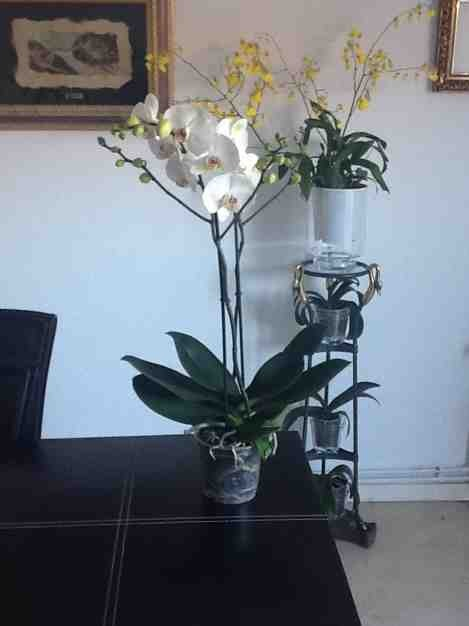 New NoId Paph-imageuploadedbytapatalk1359927097-921129-jpg
